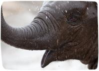 Picture of young Asian elephant for Your Expert Witness story