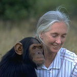 Photo of Jane Goodall with chimpanzee for Your Expert Witness story