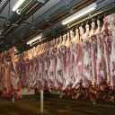 Slaughterhouse CCTV proposals to extend to Scotland